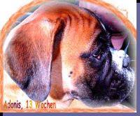 Adonis von der Siegperle Wurftag: 22.02.2002 Zuchtbuchnummer: 220271