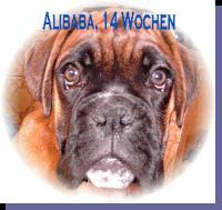 Alibaba von der Siegperle Wurftag: 22.02.2002 Zuchtbuchnummer: 220273