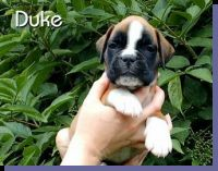 Duke von der Siegperle Wurftag: 25.06.2004 Zuchtbuchnummer: 223999