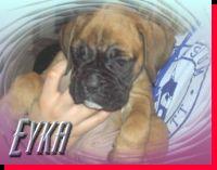Eyka von der Siegperle Wurftag: 27.02.2005 Zuchtbuchnummer: 225103