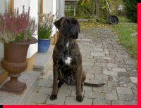 Gianna von der Siegperle Wurftag: 04.12.2007 Zuchtbuchnummer: 229874